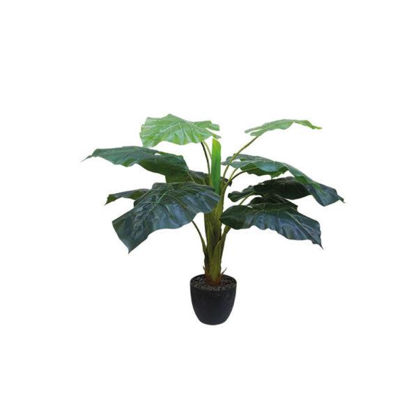 Δέντρο Άγριο Φύλλο Σε Γλάστρα Υ65