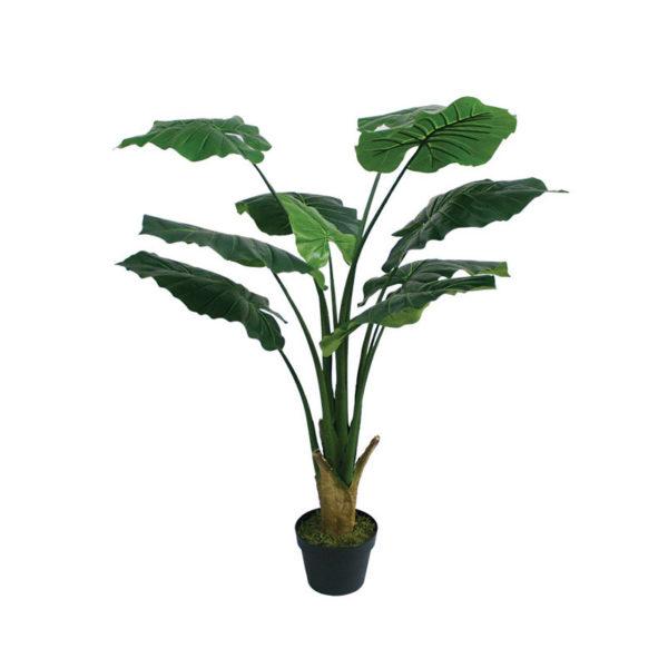 Δέντρο Άγριο Φύλλο Σε Γλάστρα Υ90
