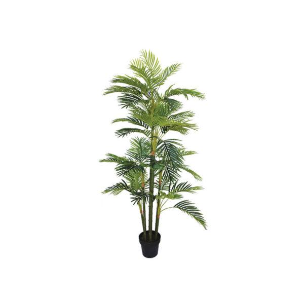 Δέντρο Αρέκα Ψηλή Σε Γλάστρα Υ170