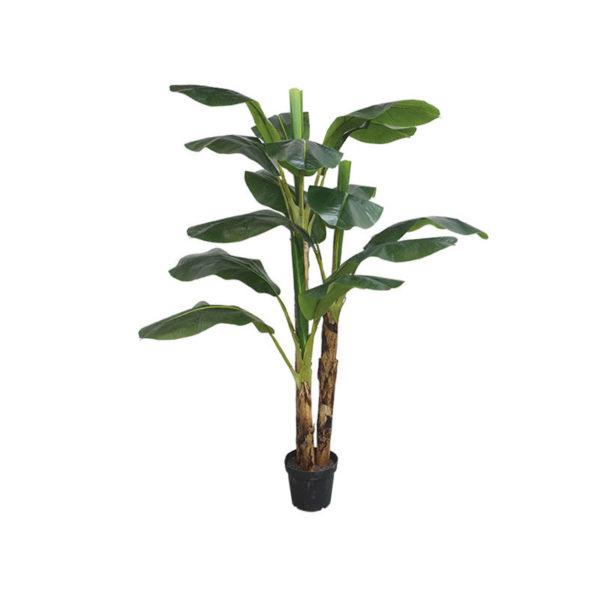 Δέντρο Μπανανιά Με Τριπλό Κορμό Σε Γλάστρα Υ188