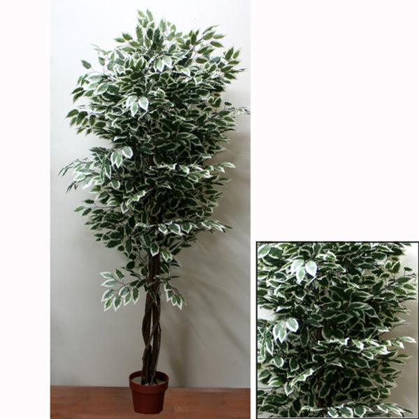 Δέντρο Μπέντζαμιν Πράσινο Δίχρωμο Σε Γλάστρα Υ210
