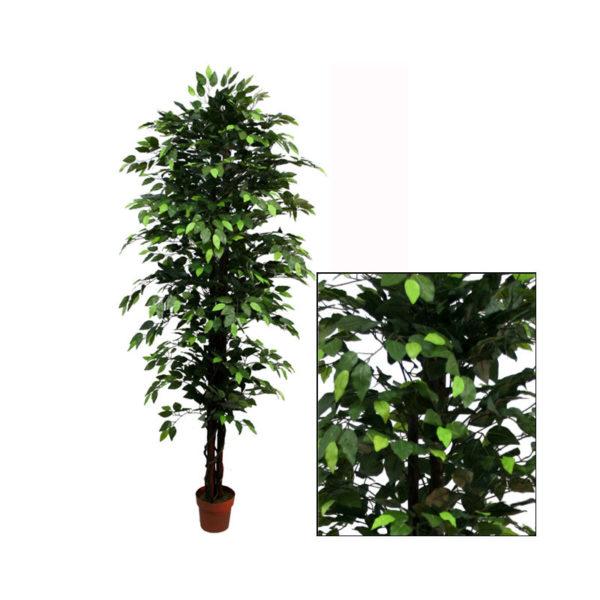 Δέντρο Μπέντζαμιν Πράσινο Σε Γλάστρα Υ210