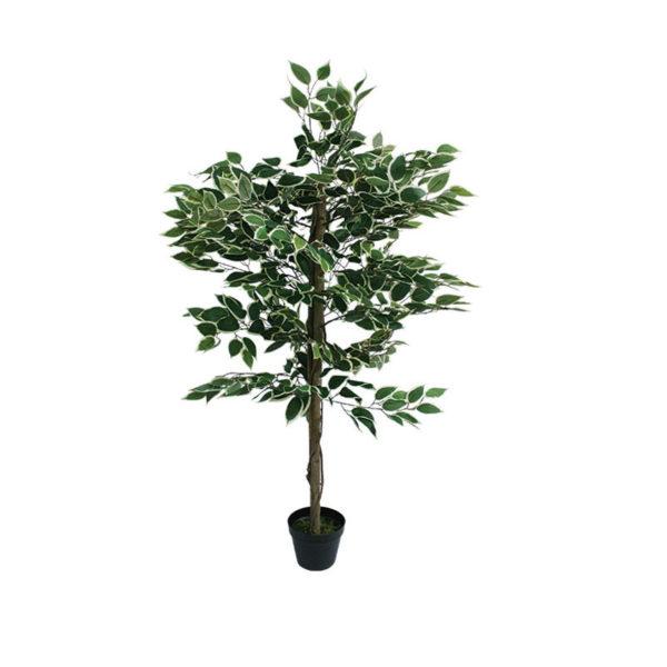 Δέντρο Μπέντζαμιν Πράσινο Δίχρωμο Σε Γλάστρα Υ120