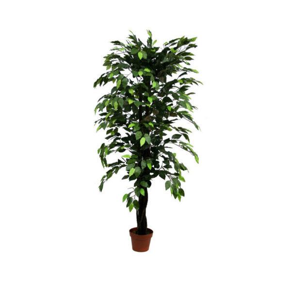 Δέντρο Μπέντζαμιν Πράσινο Σε Γλάστρα Υ150