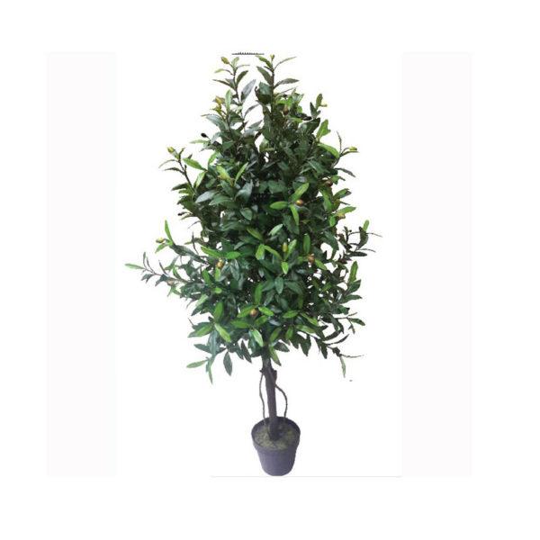 Δέντρο Ελιά Σε Γλάστρα Υ120