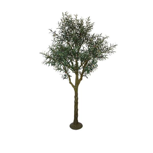 Δέντρο Ελιά Υ220