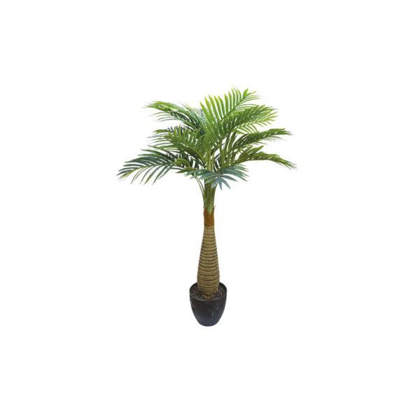 Δέντρο Φοίνικας Αρέκα Σε Γλάστρα Υ120