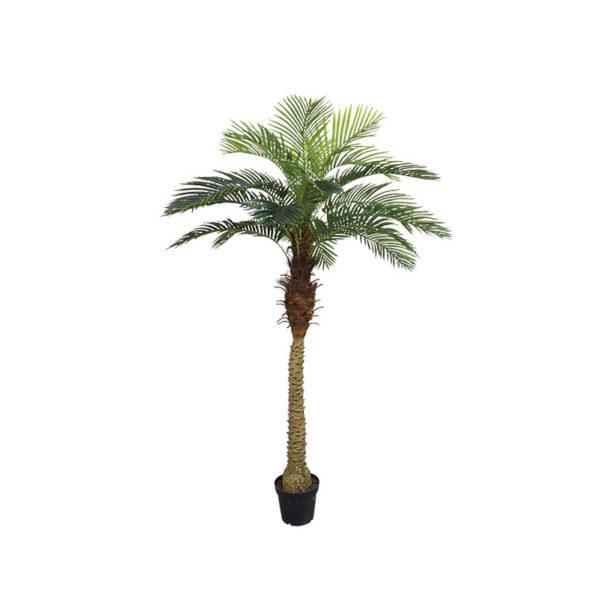 Δέντρο Φοίνικας Αρέκα Σε Γλάστρα Υ210
