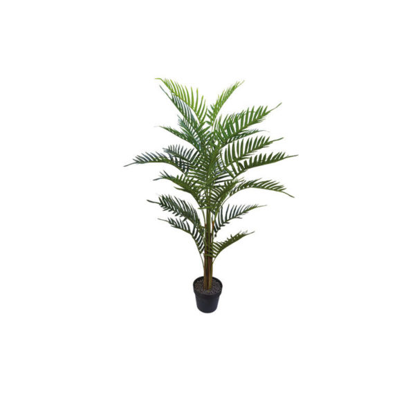 Δέντρο Φοίνικας Σε Γλάστρα Υ120