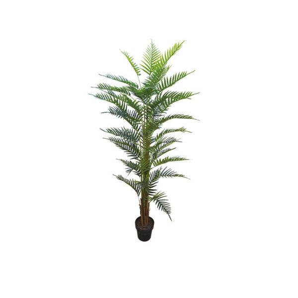 Δέντρο Φοίνικας Σε Γλάστρα Υ180