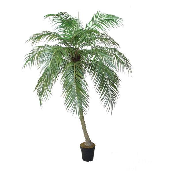 Δέντρο Φοίνικας Σε Γλάστρα Υ210