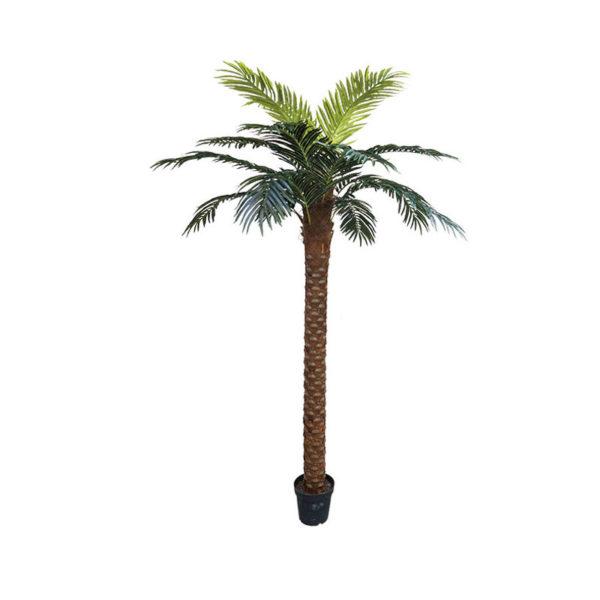 Δέντρο Φοίνικας Σε Γλάστρα Υ250