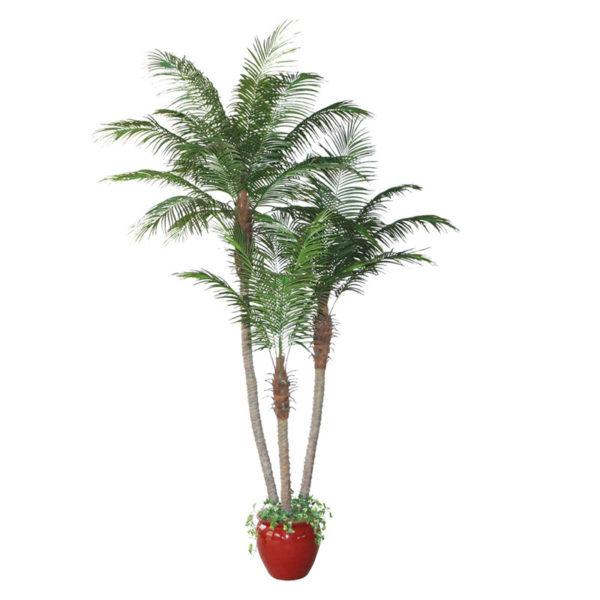 Δέντρο Φοίνικας Σε Γλάστρα Υ280