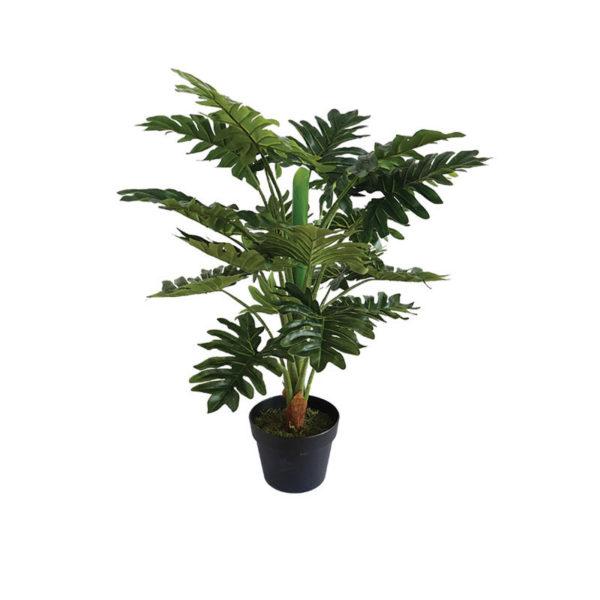 Δέντρο Φυλλόδεντρο Σε Γλάστρα Υ80