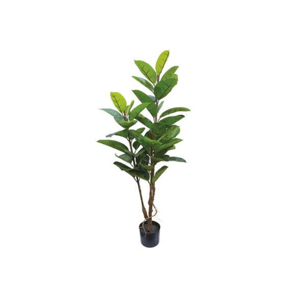 Δέντρο Καουτσούκ Σε Γλάστρα Υ120