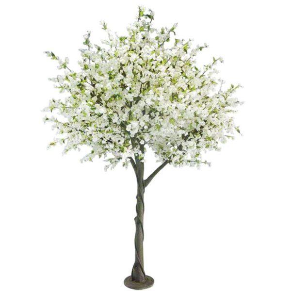 Δέντρο Κερασιά Λευκό Υ300