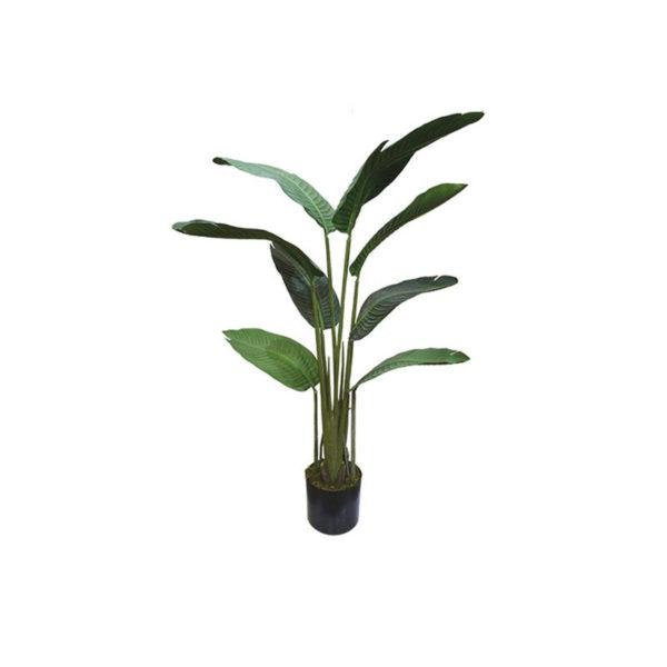 Δέντρο Πουλί Του Παραδείσου Σε Γλάστρα Υ120
