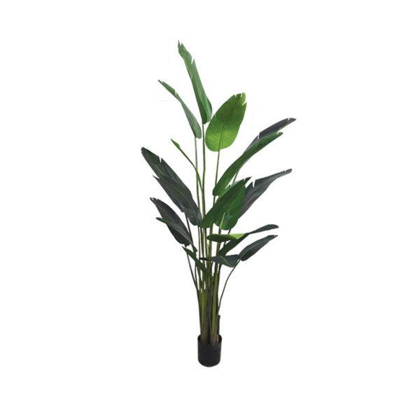 Δέντρο Πουλί Του Παραδείσου Σε Γλάστρα Υ245