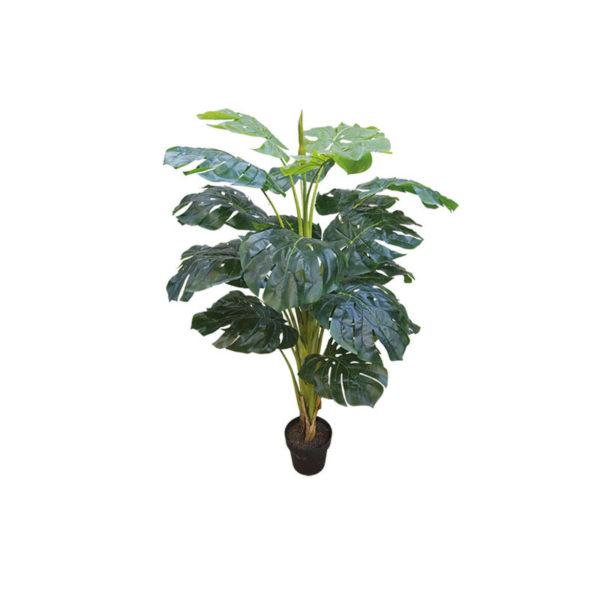 Δέντρο Σχιστόφυλλο Σε Γλάστρα Υ140