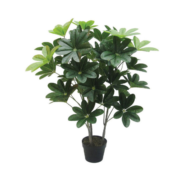 Δέντρο Σεφλέρα Σε Γλάστρα Υ100