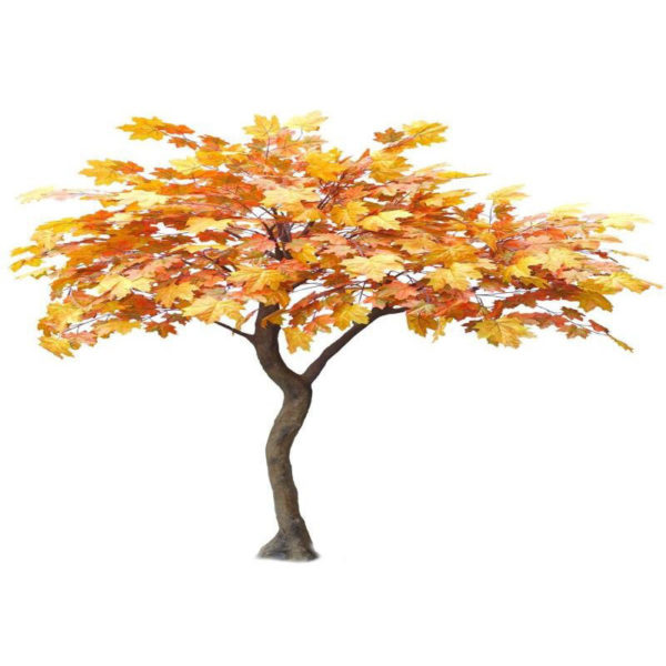 Δέντρο Σφένδαμος Πορτοκαλί Υ270