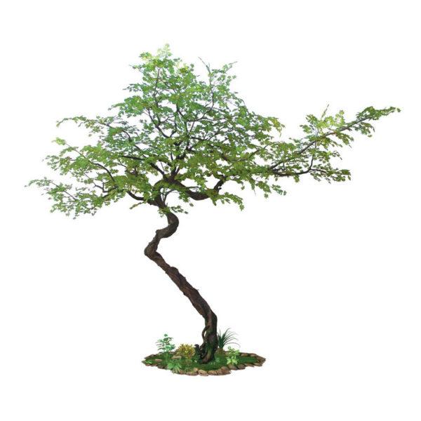 Δέντρο Σφένδαμος Υ340