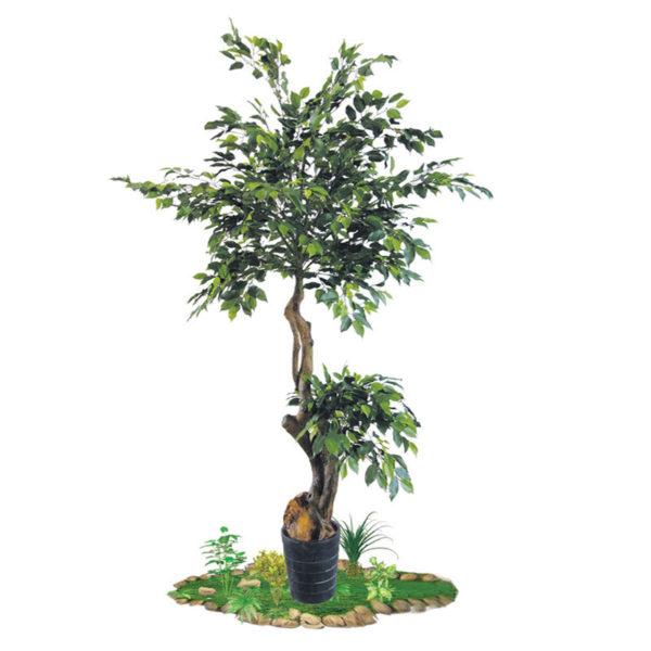 Δέντρο Συκιά Σε Γλάστρα Υ200