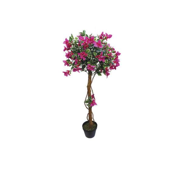 Δέντρο Βουκαμβίλια Μωβ Σε Γλάστρα Υ120