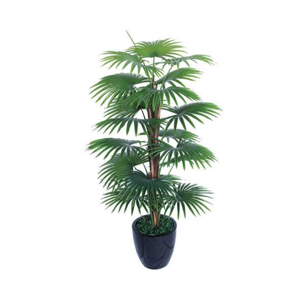 Φοινικόδεντρο Σε Γλάστρα Υ120