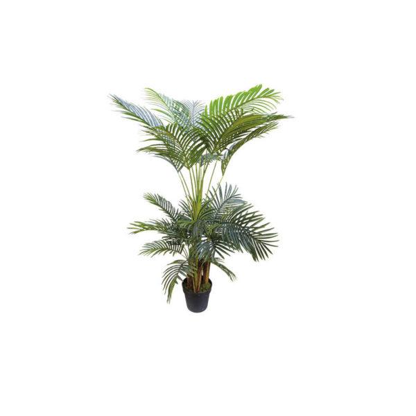 Φοινικόδεντρο Σε Γλάστρα Υ150