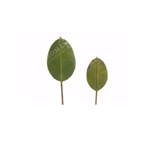 Φύλλο Πράσινο Υ30