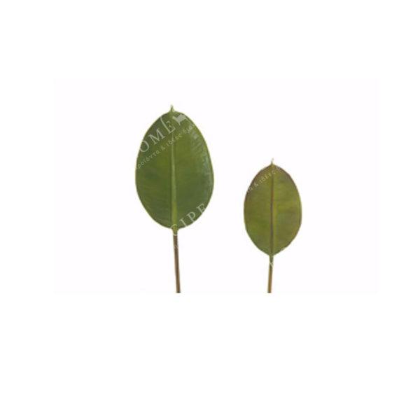 Φύλλο Πράσινο Υ43