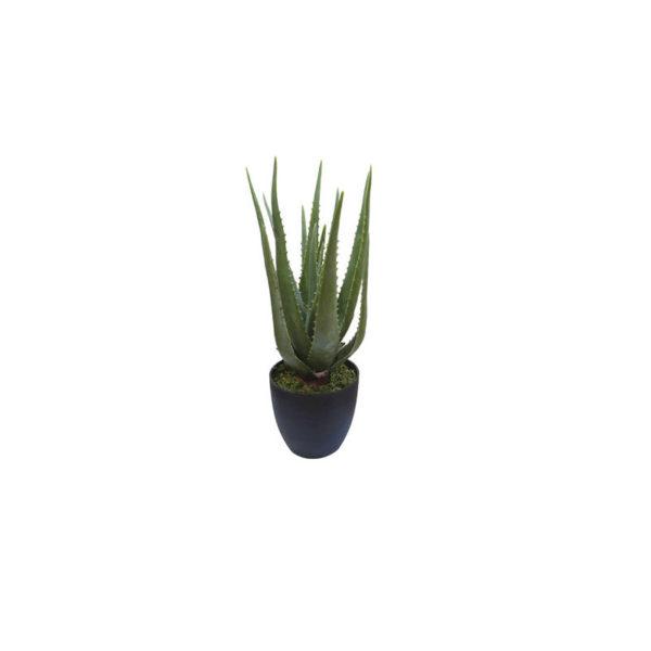 Φυτό Αλόη Σε Γλάστρα Υ47