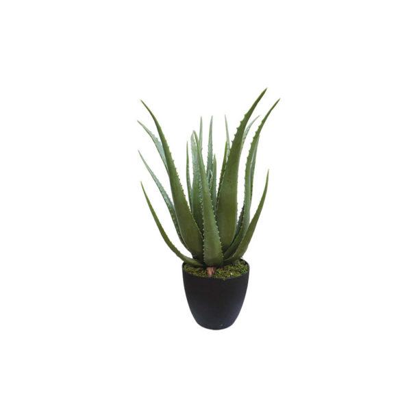 Φυτό Αλόη Σε Γλάστρα Υ70