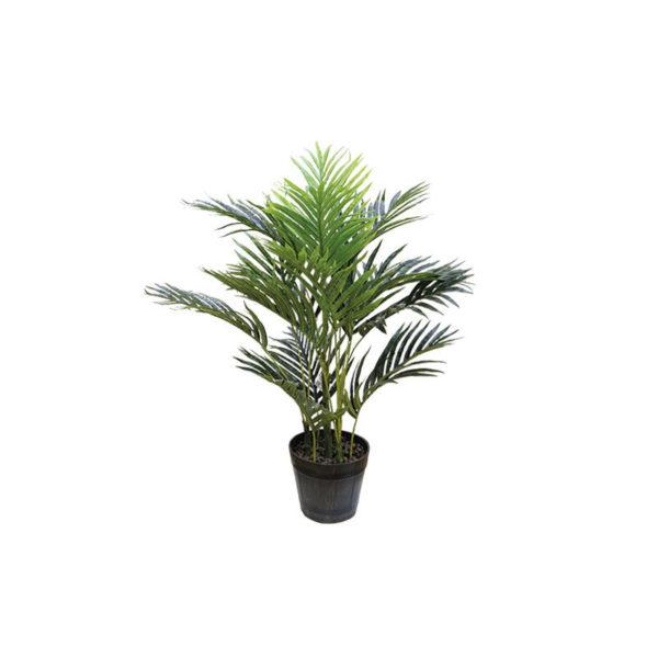 Φυτό Αρέκα Σε Γλάστρα Υ70