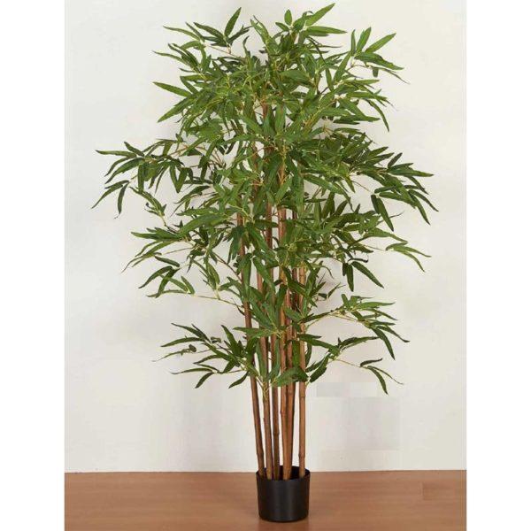 Φυτό Μπαμπού Υ150