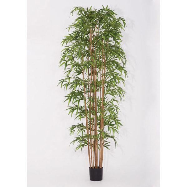 Φυτό Μπαμπού Υ240