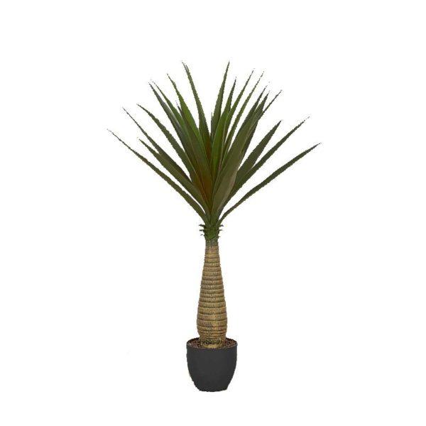 Φυτό Γιούκα Σε Γλάστρα Υ110