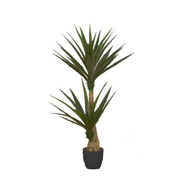 Φυτό Γιούκα Σε Γλάστρα Υ130