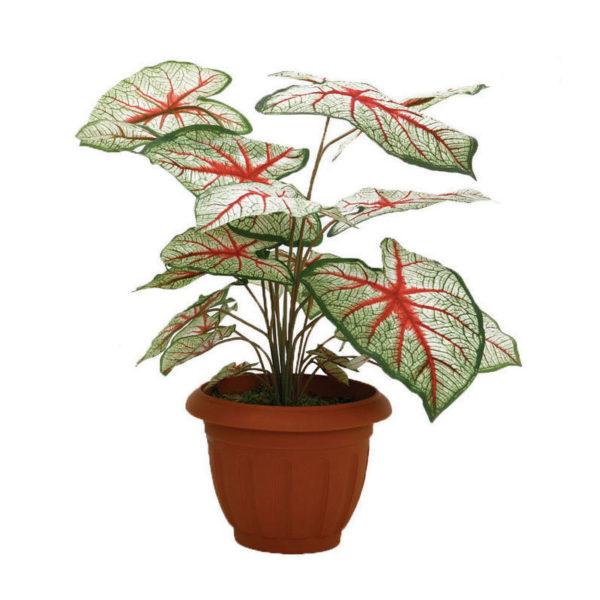 Φυτό Σε Γλάστρα Πράσινο/ Κόκκινο Υ70