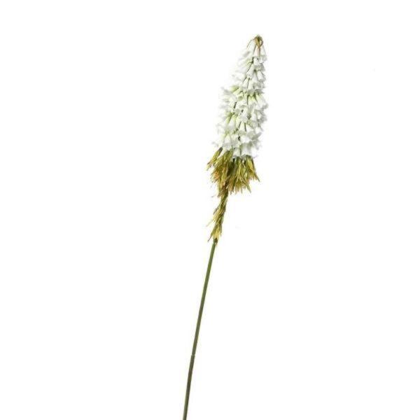 Κλωνάρι Κνιφόφια Λευκό/ Πράσινο Υ80