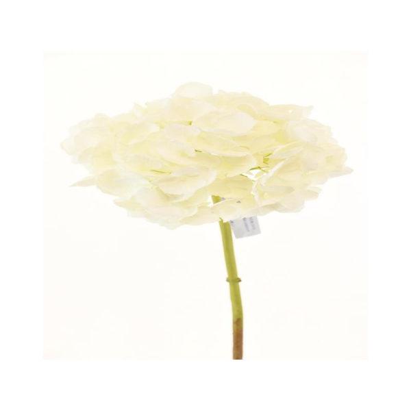 Ορτανσία Λευκή Υ52