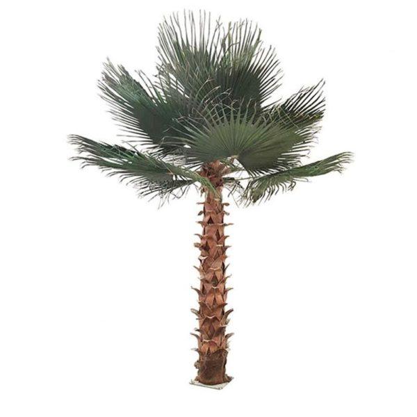 Τεχνητό Δέντρο Φοίνικας Υ300, A