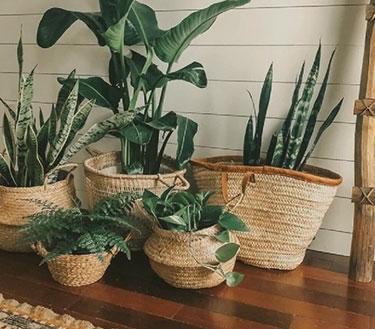 boho_plantrs