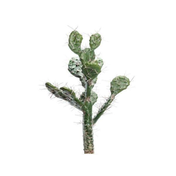 Τεχνητό Φυτό Κάκτος Χωνευτός Υ70