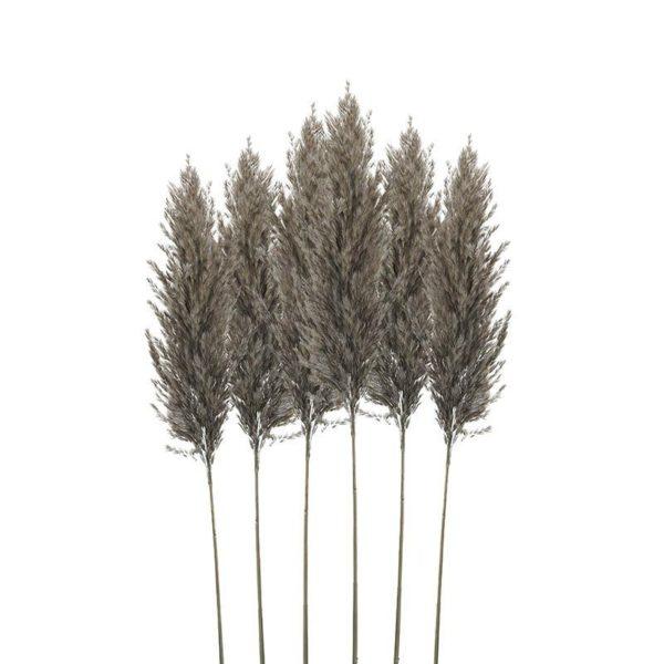 Διακοσμητικό Κλαδί 'Pampas Grass' Brown/ Gray Υ70, Σετ Των 6, Inart