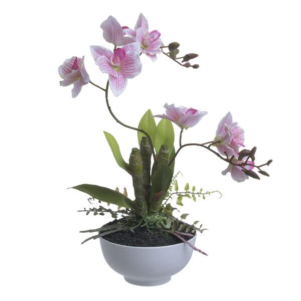 Λουλούδι Σε Γλάστρα